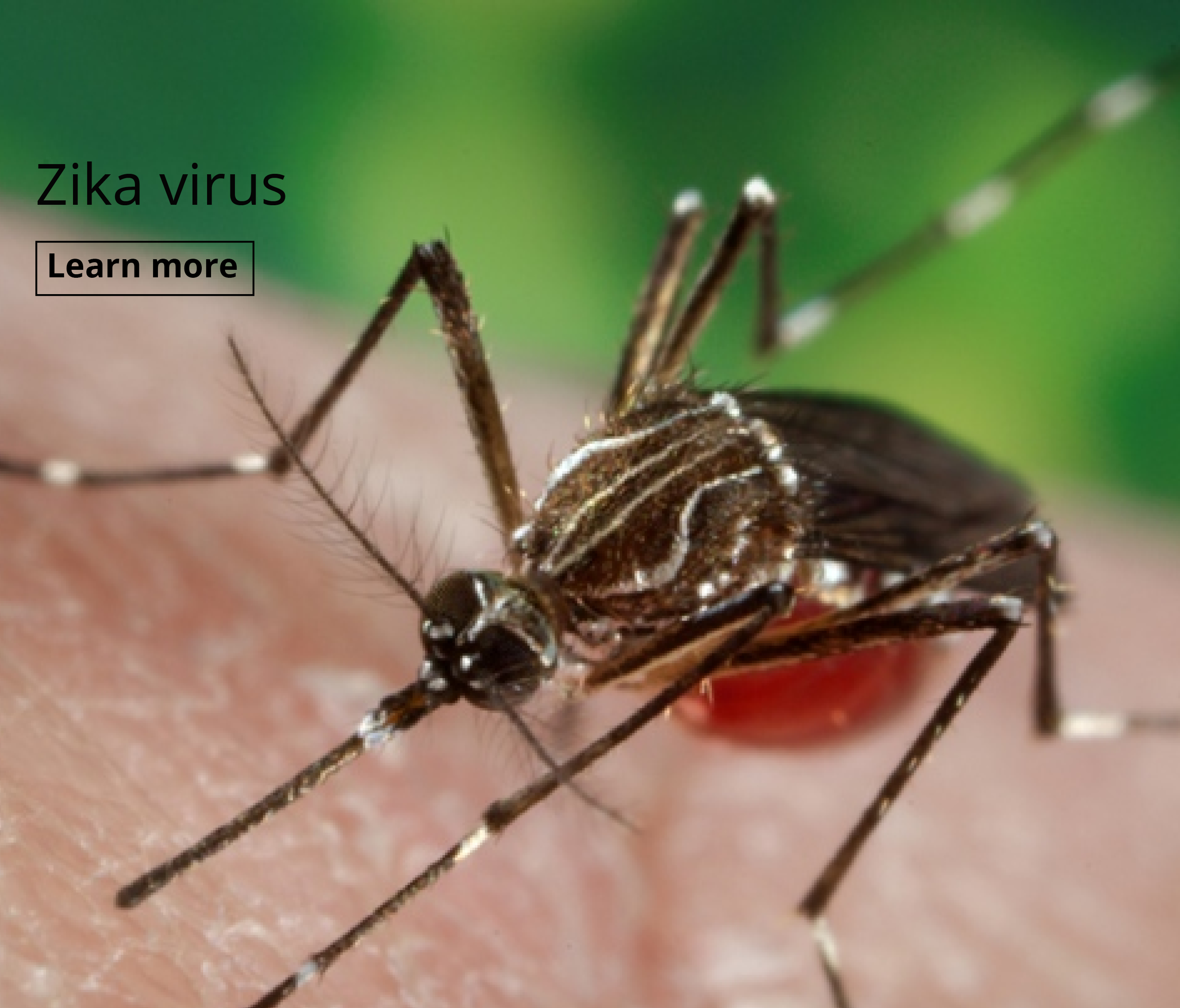 Zika virus - travel health alert