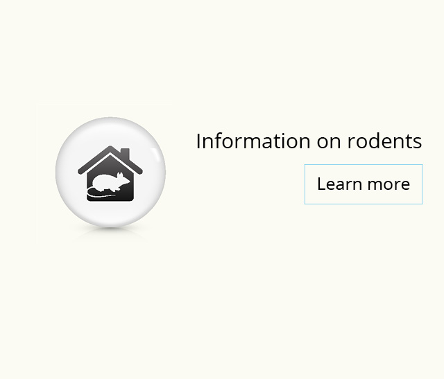Information on rodents